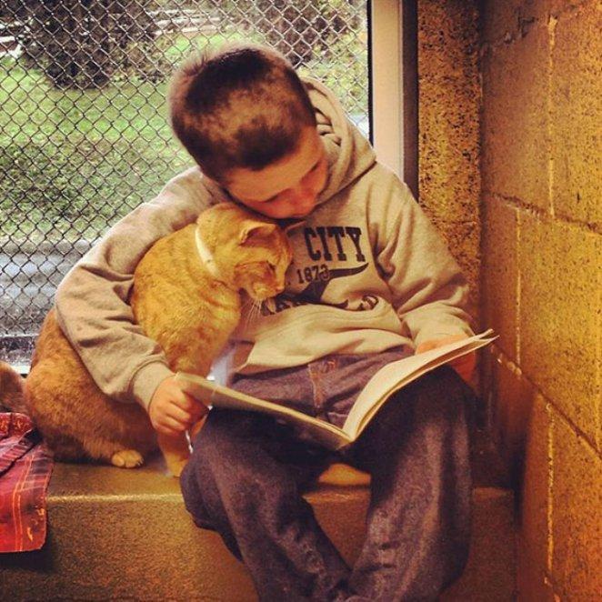 kedisine kitap okuyan çocuk