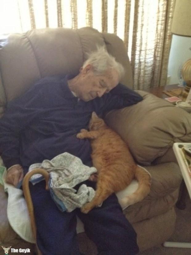 yaşlıyla uyuyan kedi