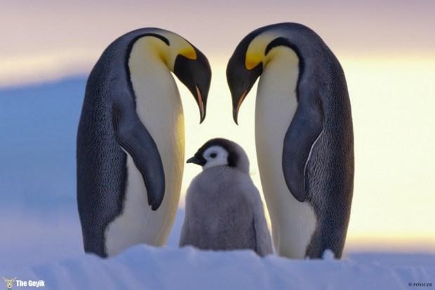 penguen fotoğrafları 2
