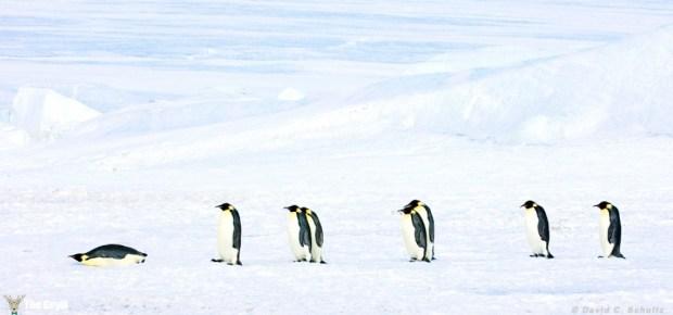 penguen fotoğrafları komik 7