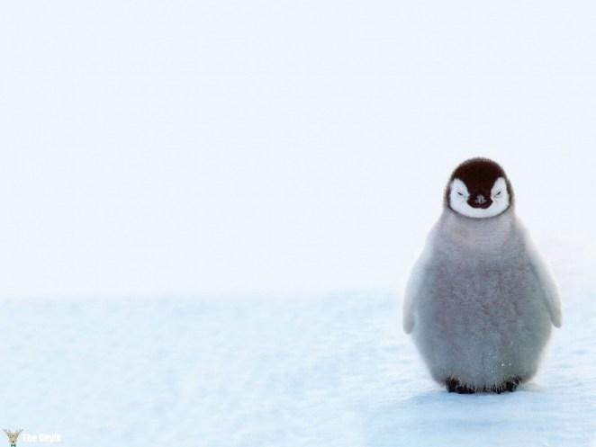 penguen fotoğrafları komik de