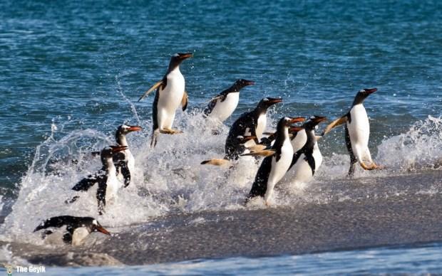 penguen fotoğrafları komik foto