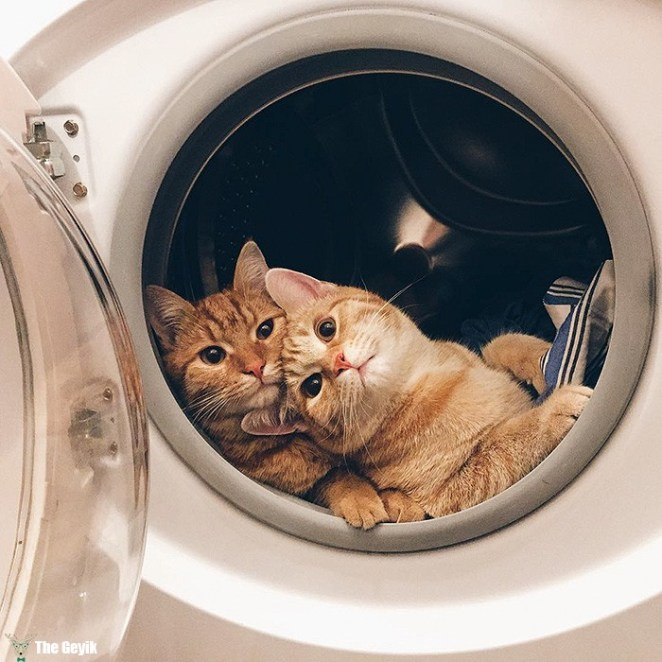 rescue-cats-inseparable-brothers-ginger-anyagrapes-13