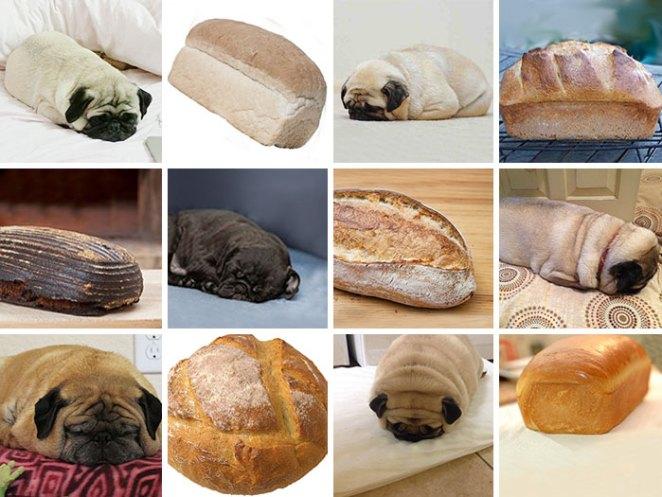 dog-food-comparison-bagel-muffin-lookalike-teenybiscuit-karen-zack-61__700