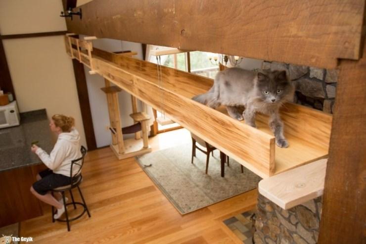 Evini Kediler İçin Tekrar Tasarlayan Hayvansever 4