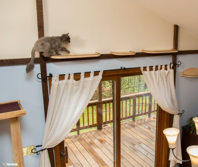 Evini Kediler İçin Tekrar Tasarlayan Hayvansever 7