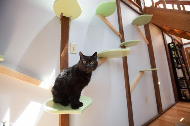 Evini Kediler İçin Tekrar Tasarlayan Hayvansever 9