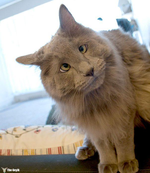 Gözleri Şaşı Olan Kediler11