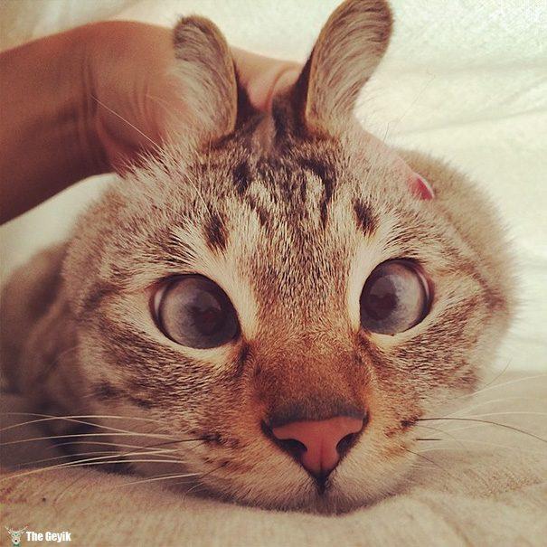 Gözleri Şaşı Olan Kediler12