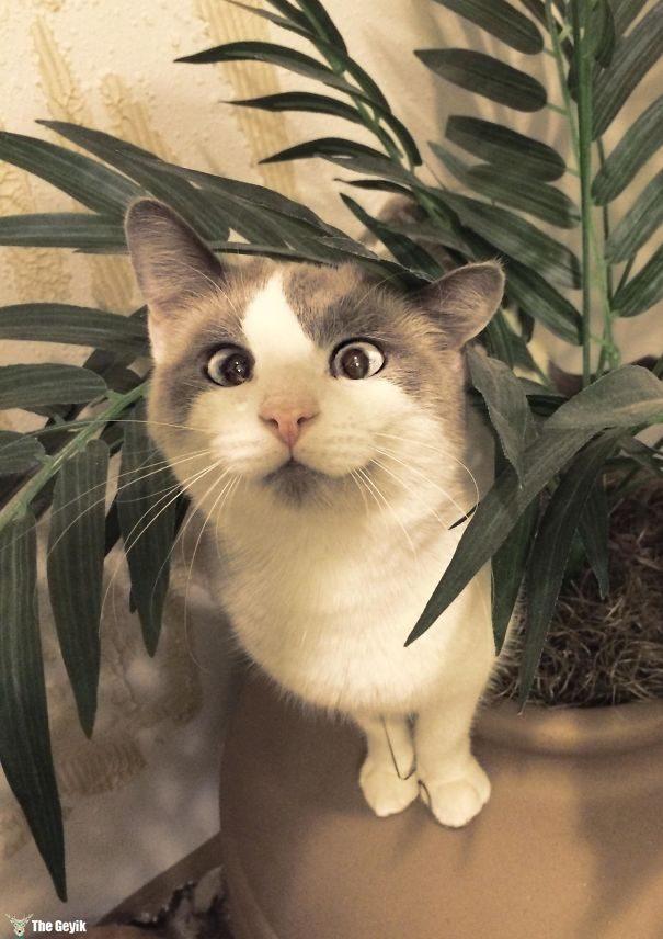 Gözleri Şaşı Olan Kediler4