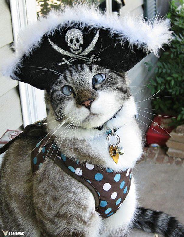 Gözleri Şaşı Olan Kediler7
