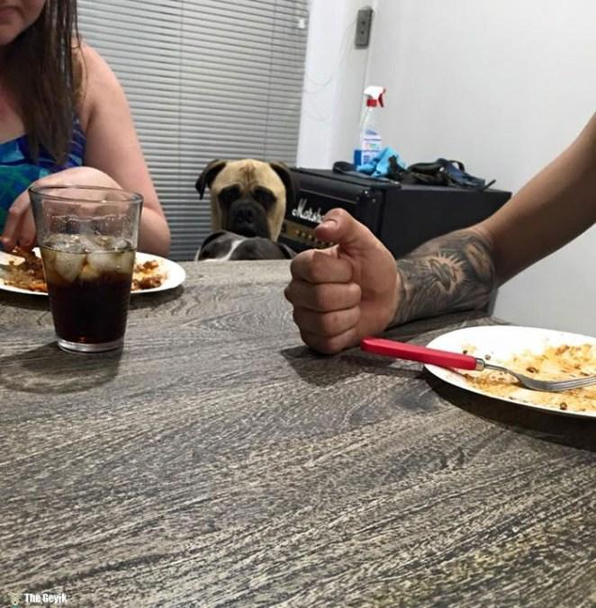 Sahibini Çaktırmadan Stalklamaya Çalışan Köpek 13