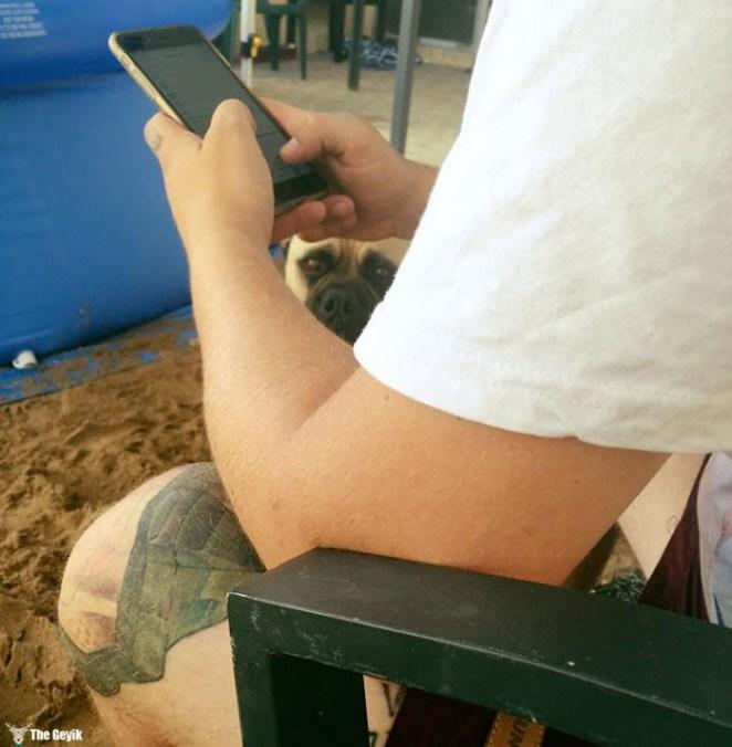 Sahibini Çaktırmadan Stalklamaya Çalışan Köpek 2