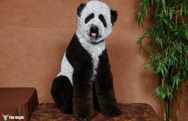 Komik köpek kedi traşları kuaför 4