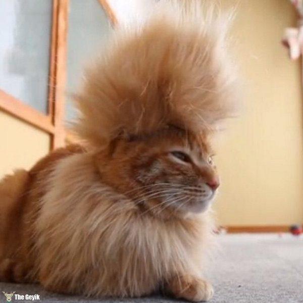 Komik köpek kedi traşları kuaför 9
