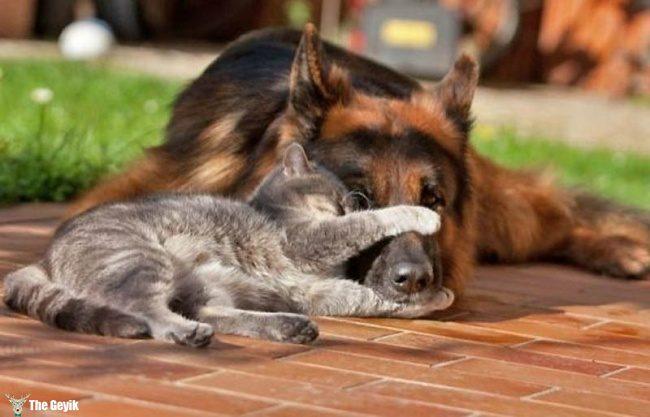 dost olan kedi ve kopekler14