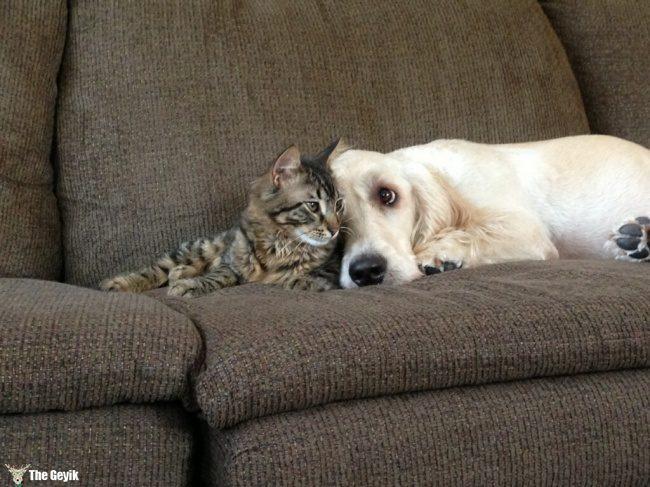 dost olan kedi ve kopekler15