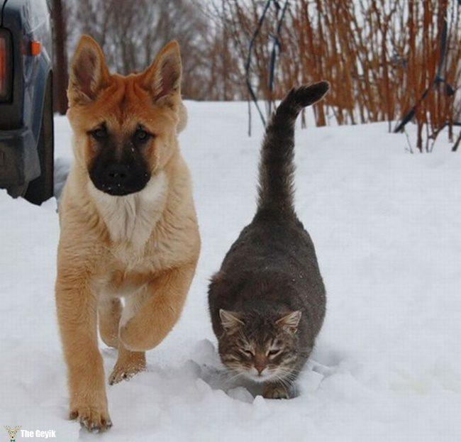 dost olan kedi ve kopekler2