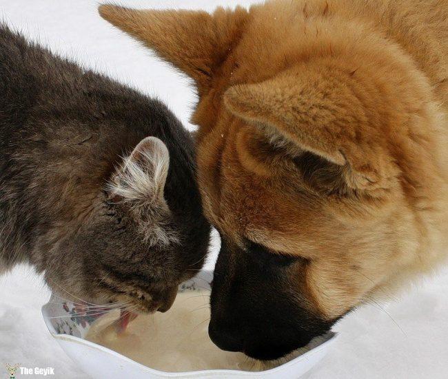 dost olan kedi ve kopekler5