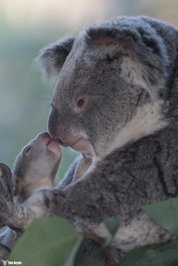 bebek hayvanlar 3