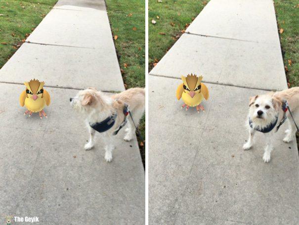 hayvanlar pokemon go görebiliyor 4