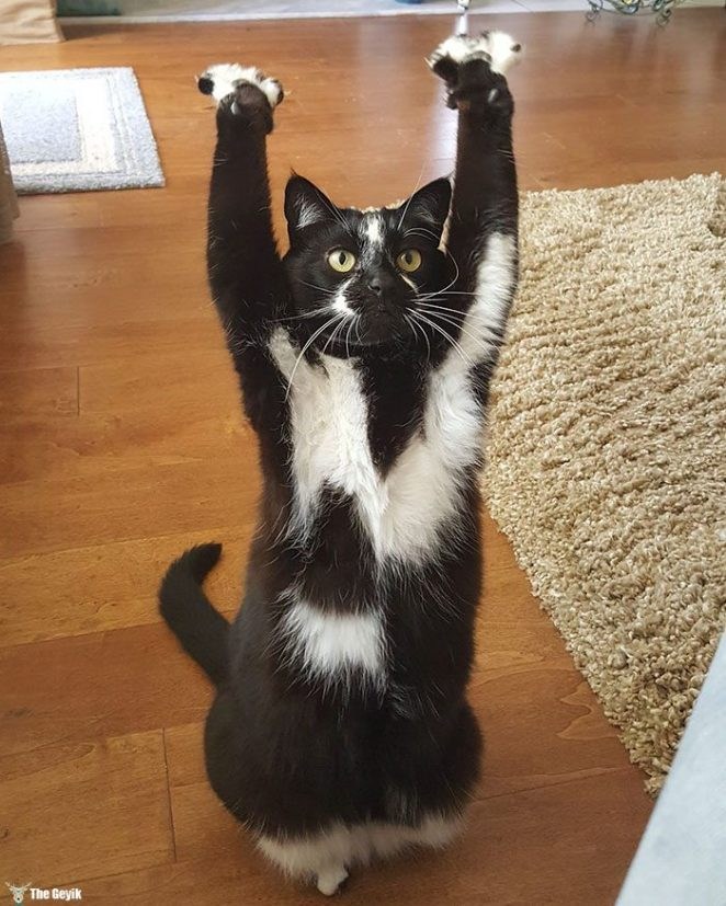teslim olan kedi7