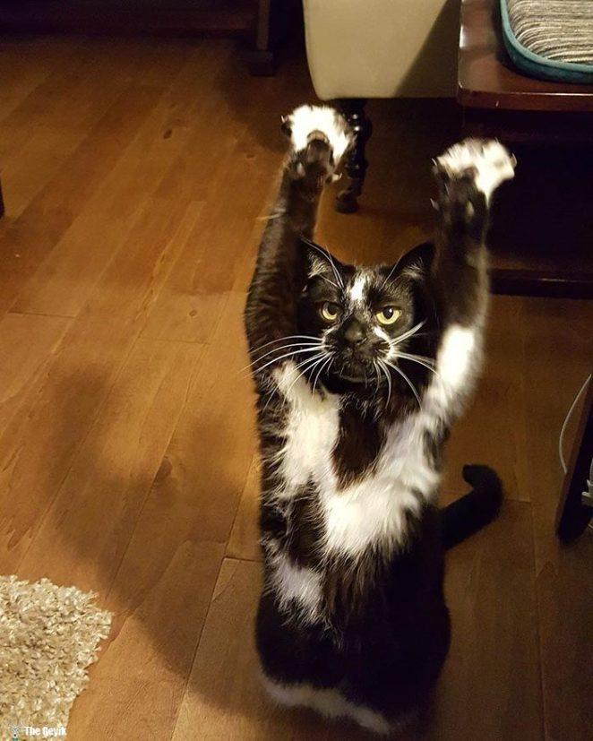 teslim olan kedi9