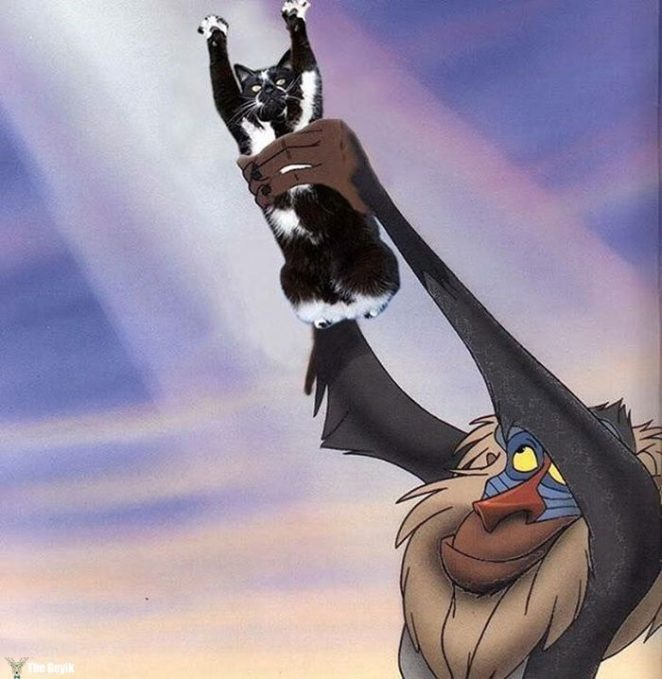ayakta duran kedi komik photoshop battle 2