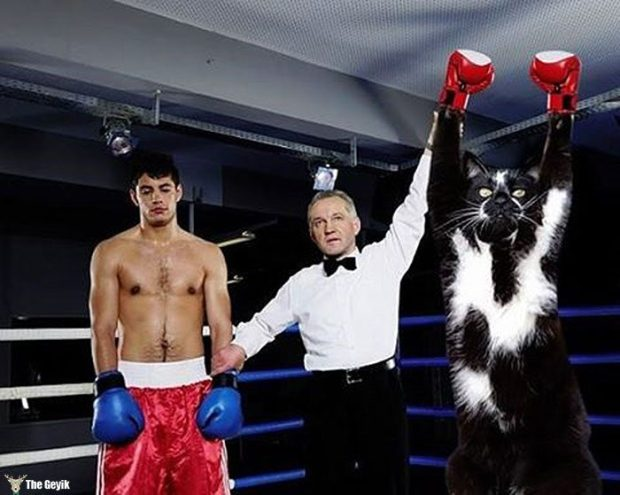 ayakta duran kedi komik photoshop battle 7