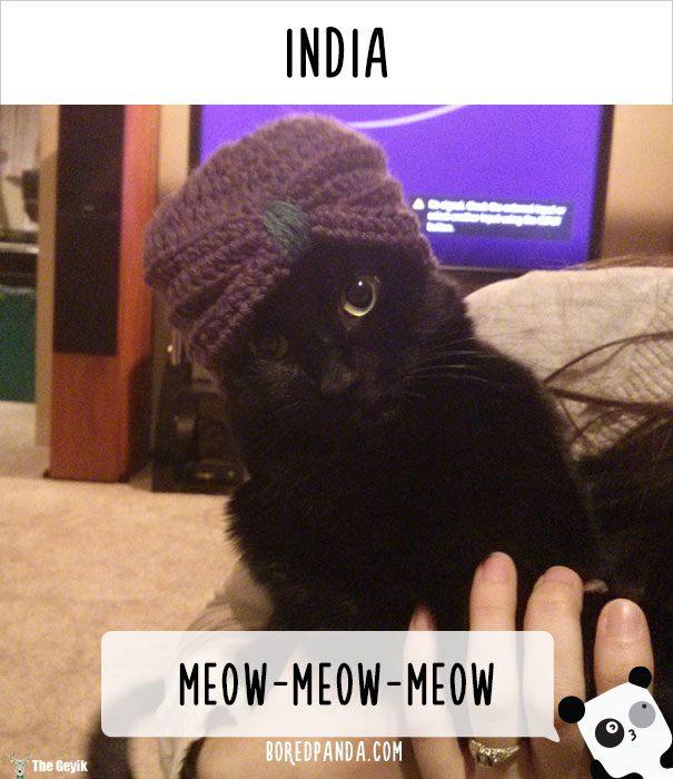 insanlar kedileri diğer dillerde nasıl çağırıyor 13