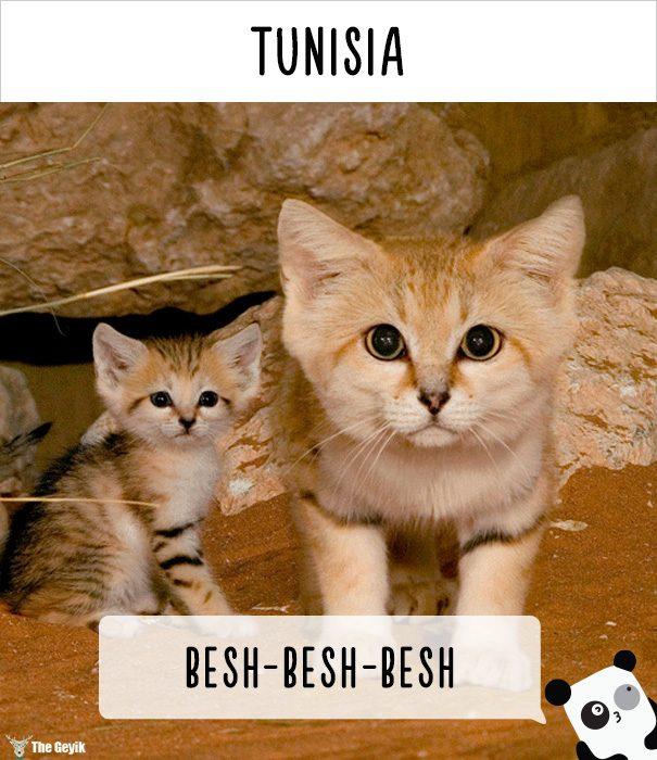 insanlar kedileri diğer dillerde nasıl çağırıyor 15
