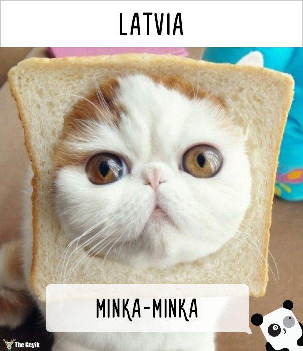 insanlar kedileri diğer dillerde nasıl çağırıyor 16