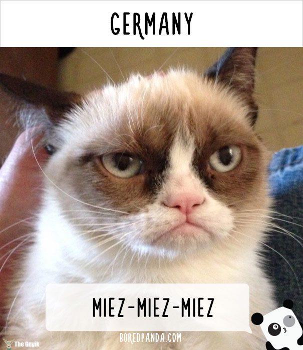 insanlar kedileri diğer dillerde nasıl çağırıyor 4