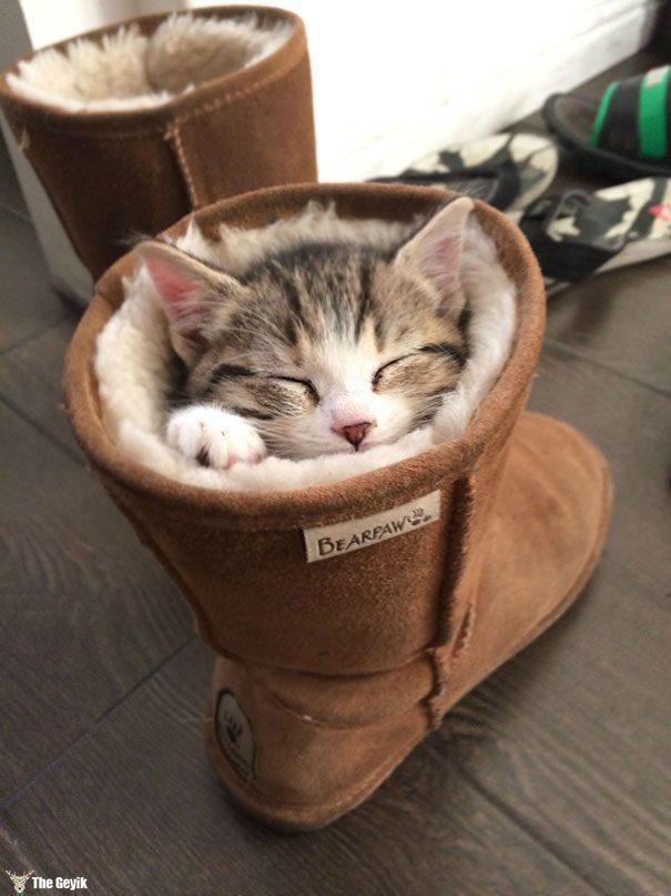 uyuyan-kediler-14