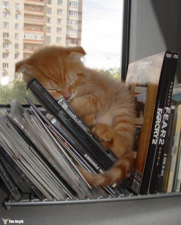 uyuyan-kediler-15