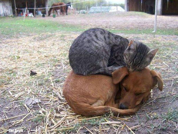 uyuyan-kediler-6