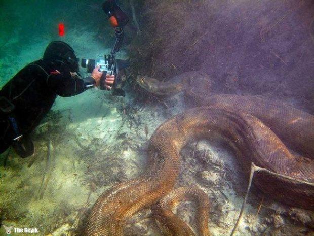 yuzmekten-korkmanizi-saglayacak-deniz-fotograflari-5