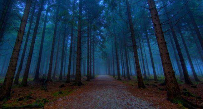 uks most haunted screaming woods 1 1024x768 650x350 - 6 Hutan Mengerikan Yang Mempunyai Sebuah Kisah Mistis