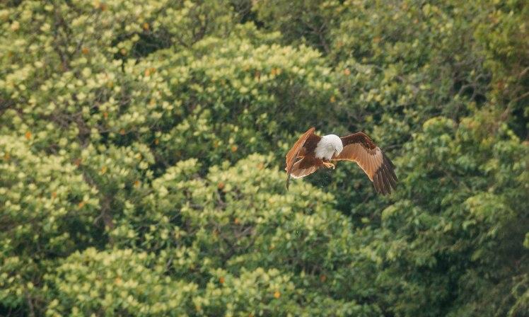Langkawi island hopping-40