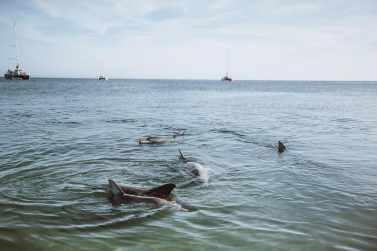 Shark Bay-7