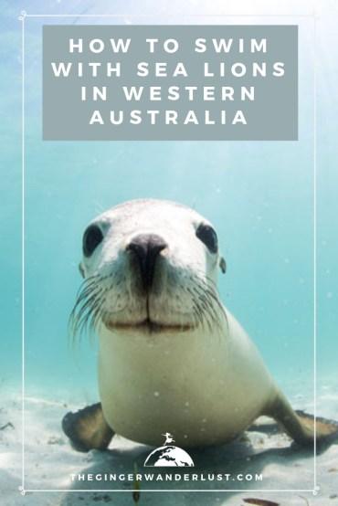 sea lions (1)