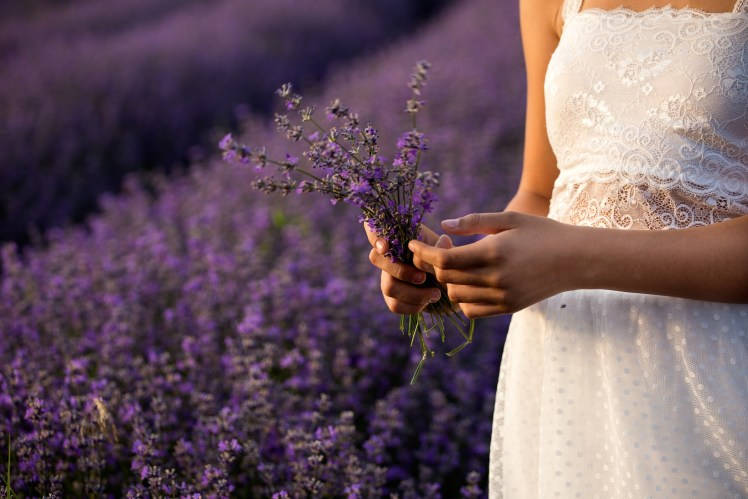 lavender-3576132_1920