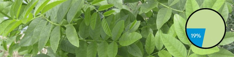 Top 10 Gin Botanicals: #8 Licorice