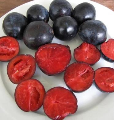 davidsonia plum