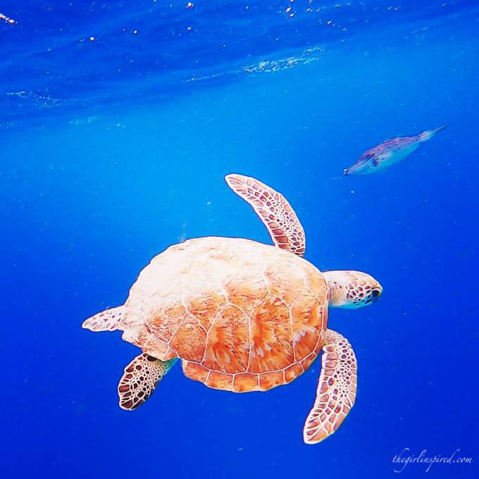 Sea Turtles snorkeling in Bonaire
