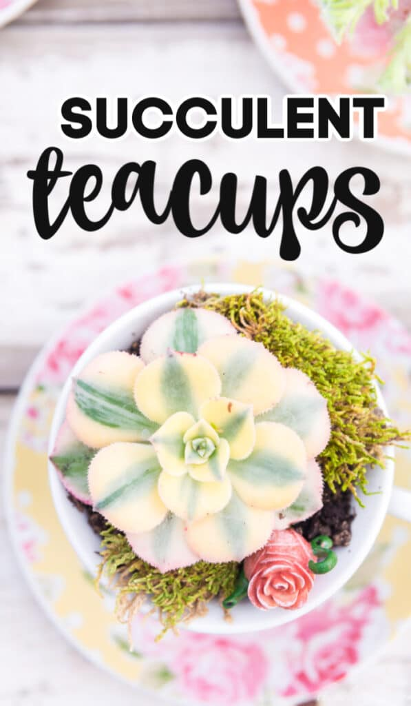succulent teacup made with succulents planted in yellow floral polka dot teacups with moss and miniature teapot