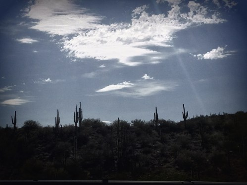 cactus sedona arizona