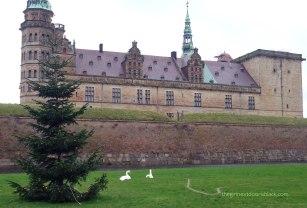 Kronborg Christmas Tree swans Denmark