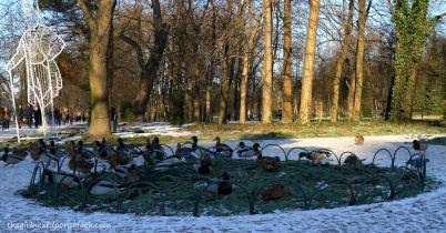 Łazienki Park Ducks | The Girl Next Door is Black