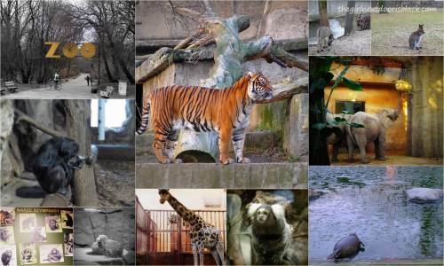 Animals at the Warsaw Zoo